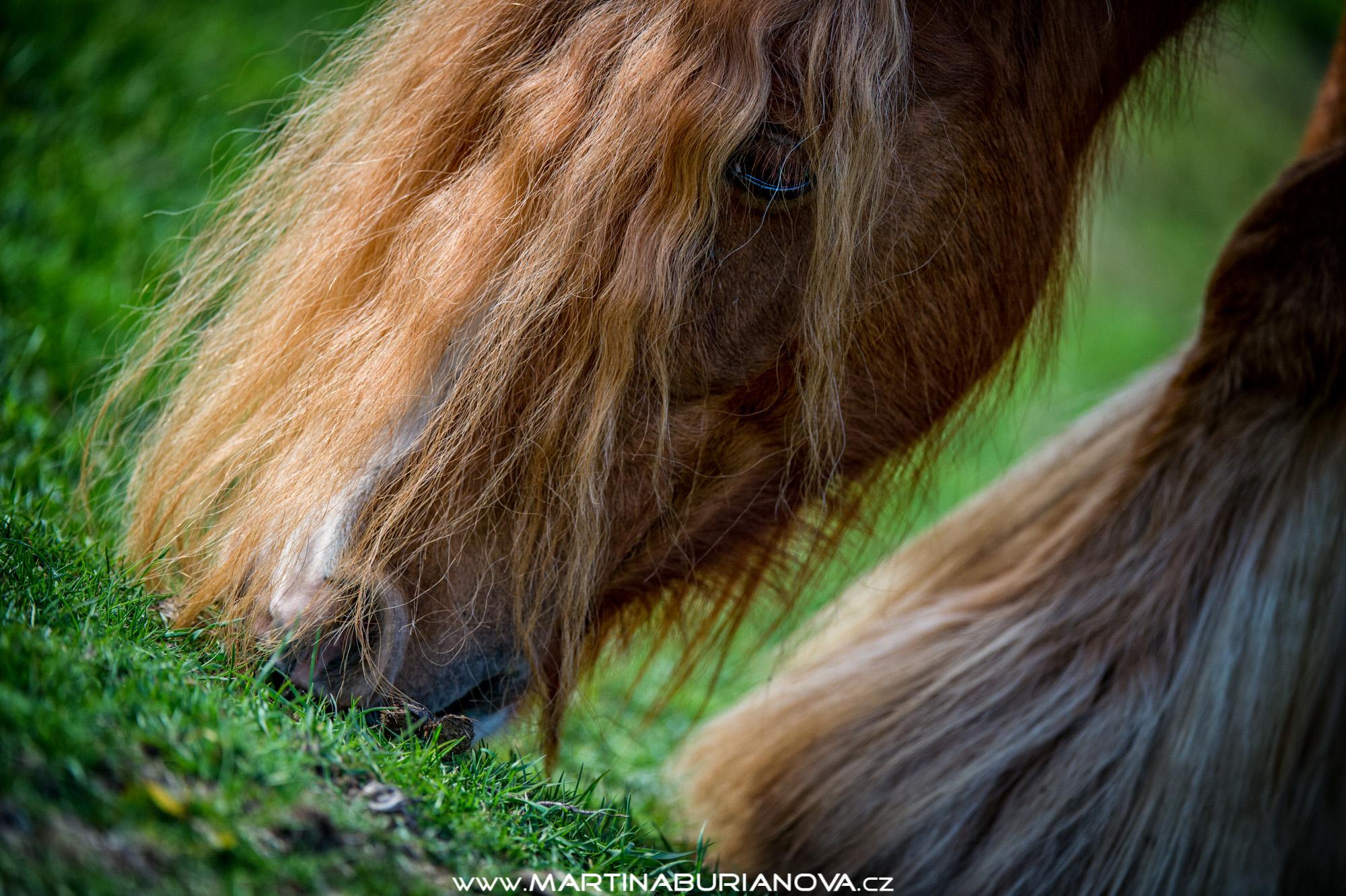 Ötletek és tanácsok a hosszú bokaszőrű lovak tulajdonosai számára